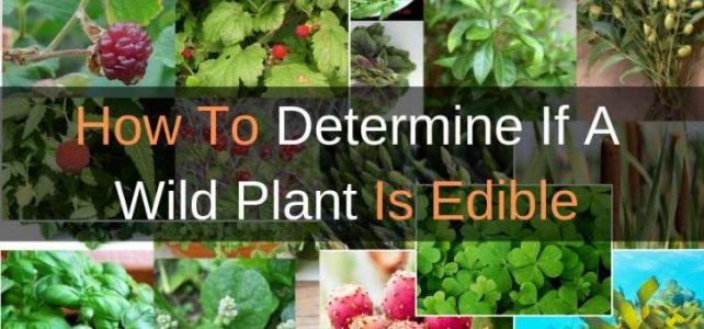 How To Determine If A Wild Plant Is Edible